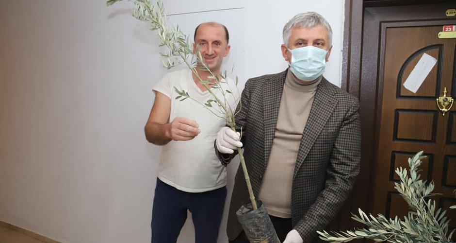Başkan Sarıalioğlu, Oflulara zeytin fidanı dağıttı